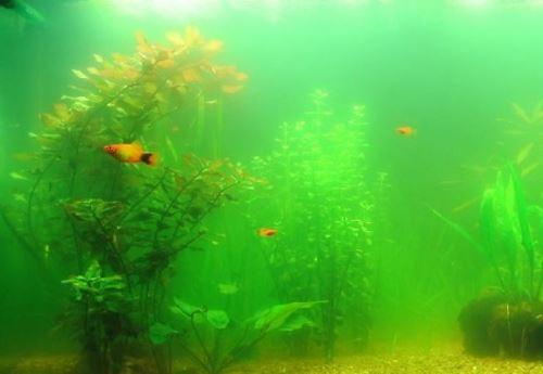 В аквариуме мутная вода
