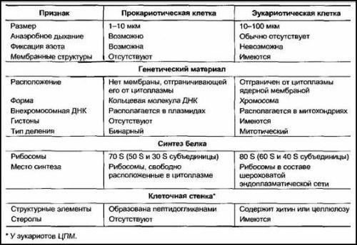 Сравнительная таблица сходств и различий прокариотической и эукариотической клетки