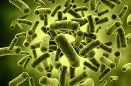 Увеличенные бактерии (компьютерная модель)