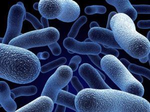 Бактерии-нитрификаторы