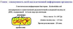 Бактериальный геном