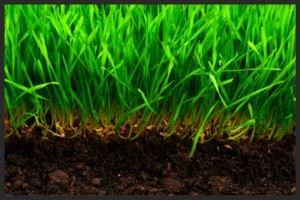 почва и трава