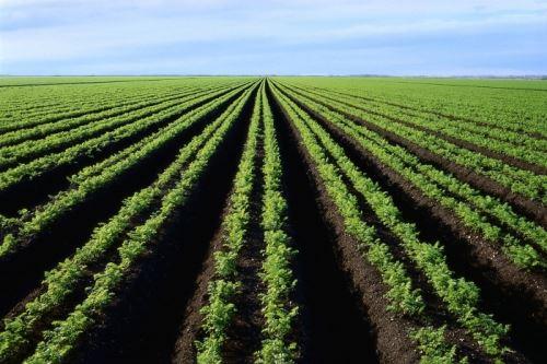 Бактерии минерализующие перегной почвы — 7 соток