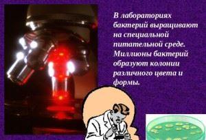выращивание бактерий