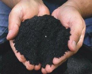 бактерии в почве