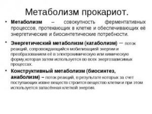 метаболизм прокариот