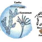царство грибов, бактерий, водорослей