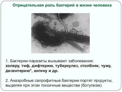 отрицательная роль бактерий