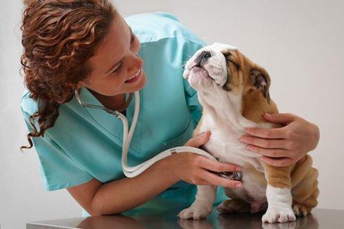 болезни собак