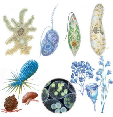 простейшие микроорганизмы