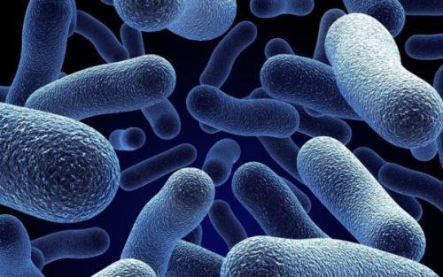 Внешний вид бактерий вибрионов