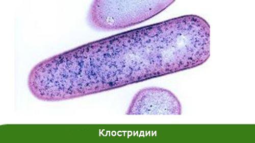 клетка в форме палочки