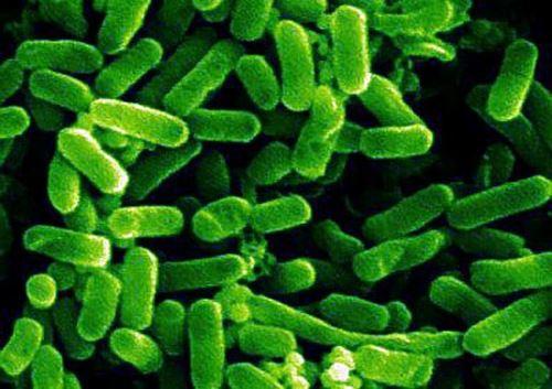 рисунок бактерии кишечная палочка