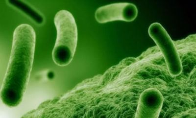 Бактерии мочеиспускательном канале