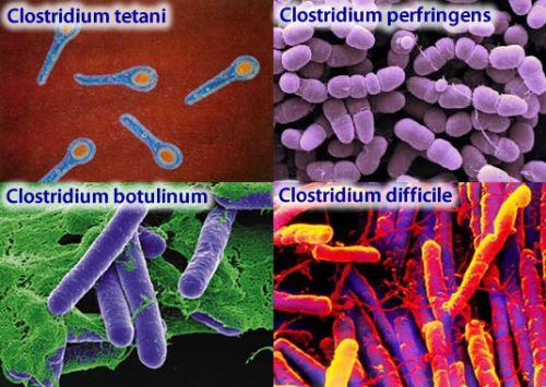 Опасность токсинов