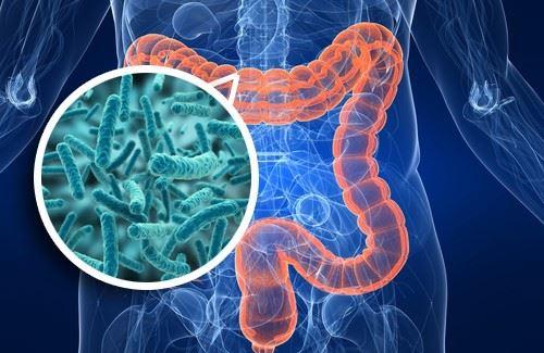 Бактерии, населяющие кишечник
