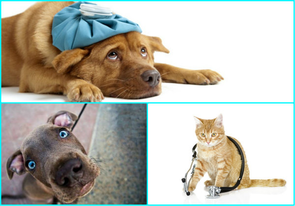 Вс об инфекционных заболеваниях у кошек симптомы и лечение признаки опасность